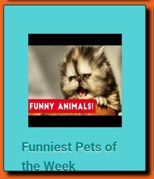 FUNNY VIRAL VIDEOS apk screenshot