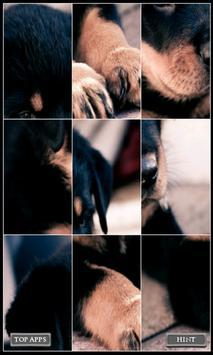 Wallpaper Puzzle : Animals apk screenshot