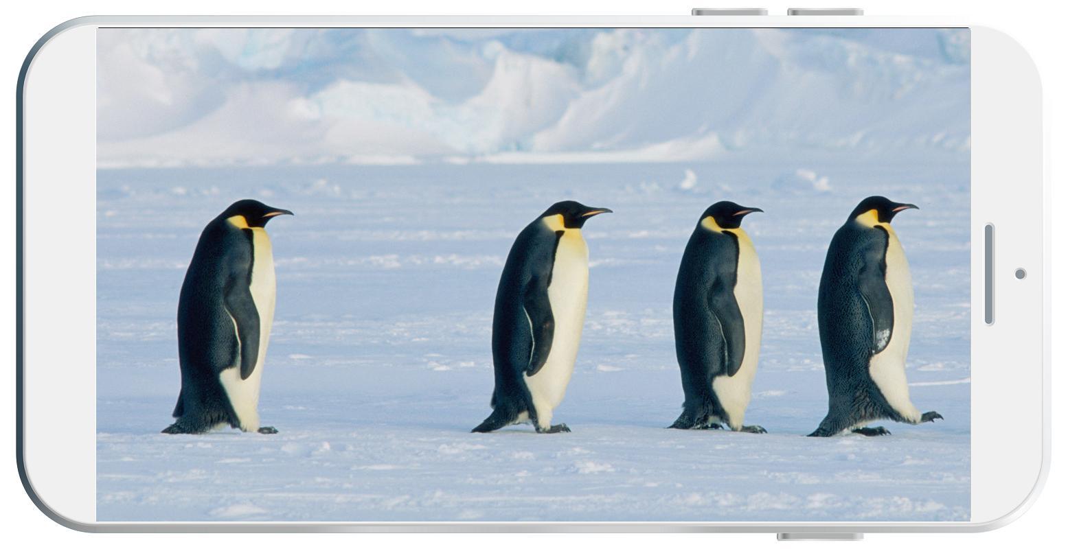 Android 用の ペンギンの壁紙 Apk をダウンロード