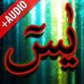 Surah Yaseen + Audio (Offline)