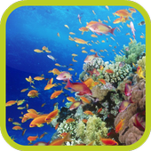 Yellow Fishes Video Wallpaper icon