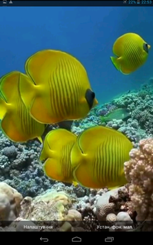 Yellow Fishes Video Wallpaper poster