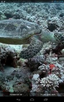 Yellow Fishes Video Wallpaper screenshot 2
