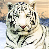 Wild White Tiger: Jungle Hunt icon