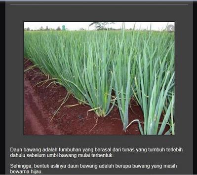Successful cultivation of leeks screenshot 4