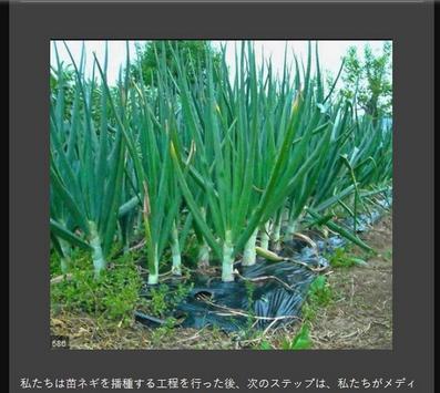 Successful cultivation of leeks screenshot 13