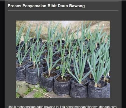 Successful cultivation of leeks screenshot 11