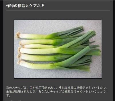 Successful cultivation of leeks screenshot 12