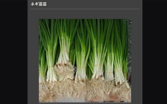 Successful cultivation of leeks screenshot 14
