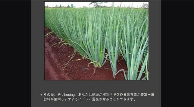 Successful cultivation of leeks screenshot 1