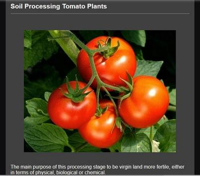 Successful cultivation of tomatoes screenshot 2