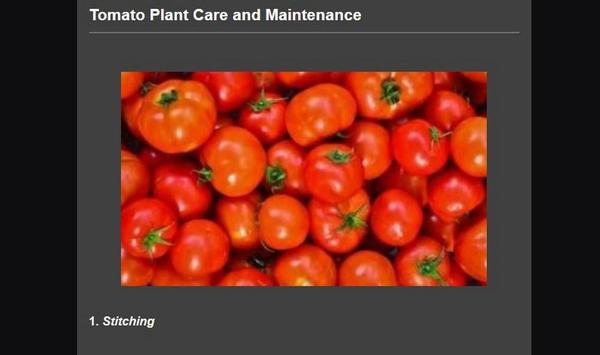Successful cultivation of tomatoes screenshot 3