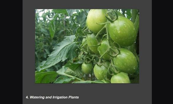 Successful cultivation of tomatoes screenshot 4
