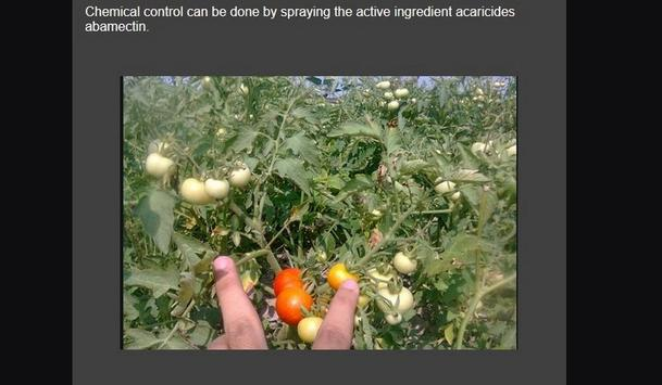 Successful cultivation of tomatoes screenshot 8