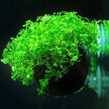 The Best Aquascape Ideas Today screenshot 8
