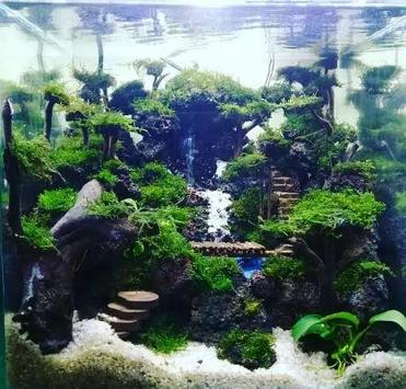 The Best Aquascape Ideas Today poster