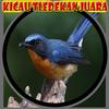 Icona Burung Kicau Tledekan Juara