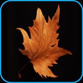 HD 4K New Wallpaper icon