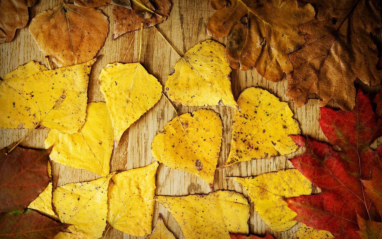 الخريف الحب خلفيات حية For Android Apk Download