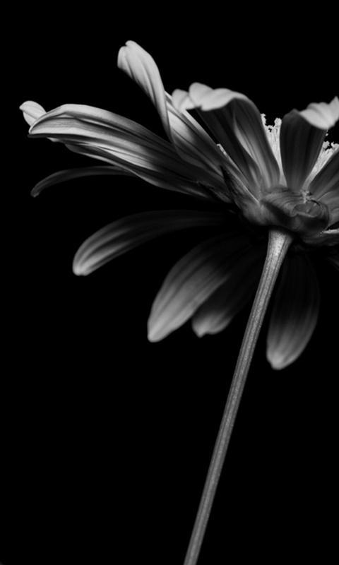 Black Flower Wallpaper For Android Apk Download