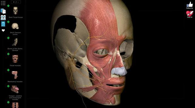 Anatomy Learning 3D - 三维解剖学地图集-解剖和学习解剖学 截图 13