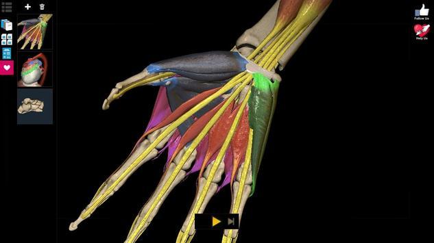 Anatomy Learning 3D - 三维解剖学地图集-解剖和学习解剖学 截图 17