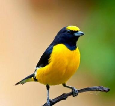 Beautiful Birds screenshot 1