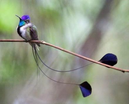 Beautiful Birds screenshot 2