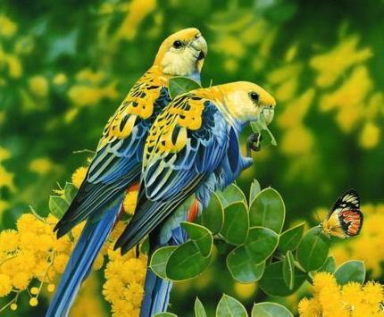 Beautiful Birds screenshot 3