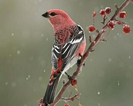 Beautiful Birds screenshot 4