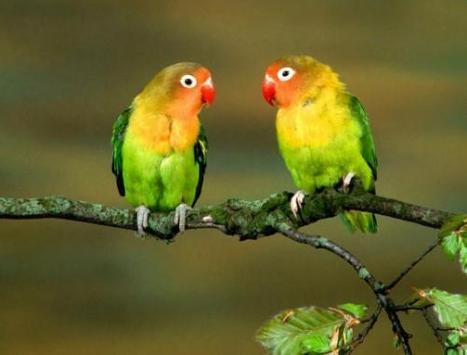 Beautiful Birds screenshot 5