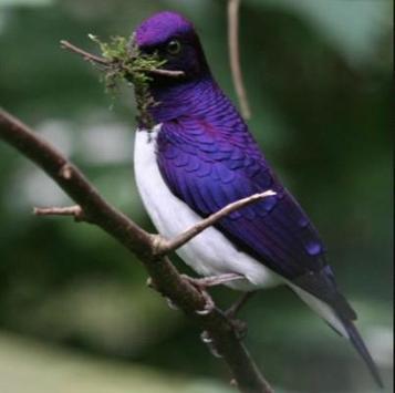 Beautiful Birds screenshot 7
