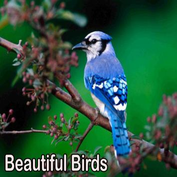 Beautiful Birds screenshot 8