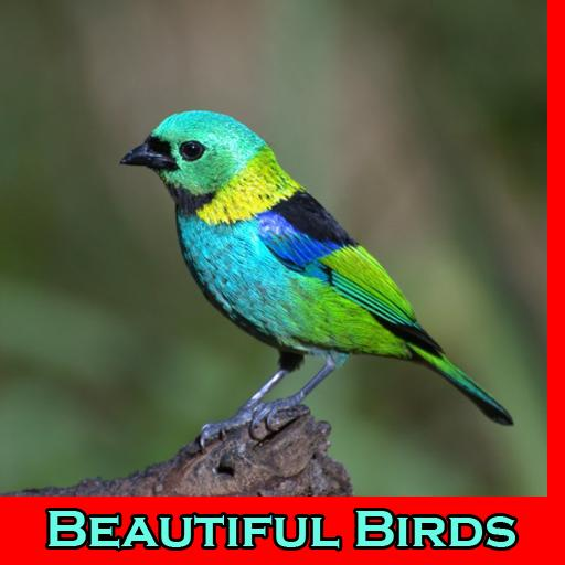 Beautiful Birds Wallpaper For Android Apk Download