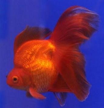 Beautiful Koki Fish Gallery screenshot 4