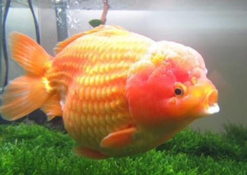Beautiful Koki Fish Gallery screenshot 5