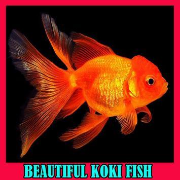Beautiful Koki Fish Gallery poster