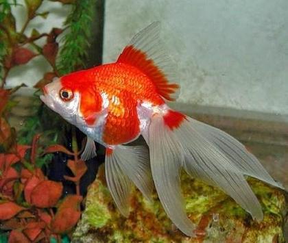 Beautiful Koki Fish Gallery screenshot 2