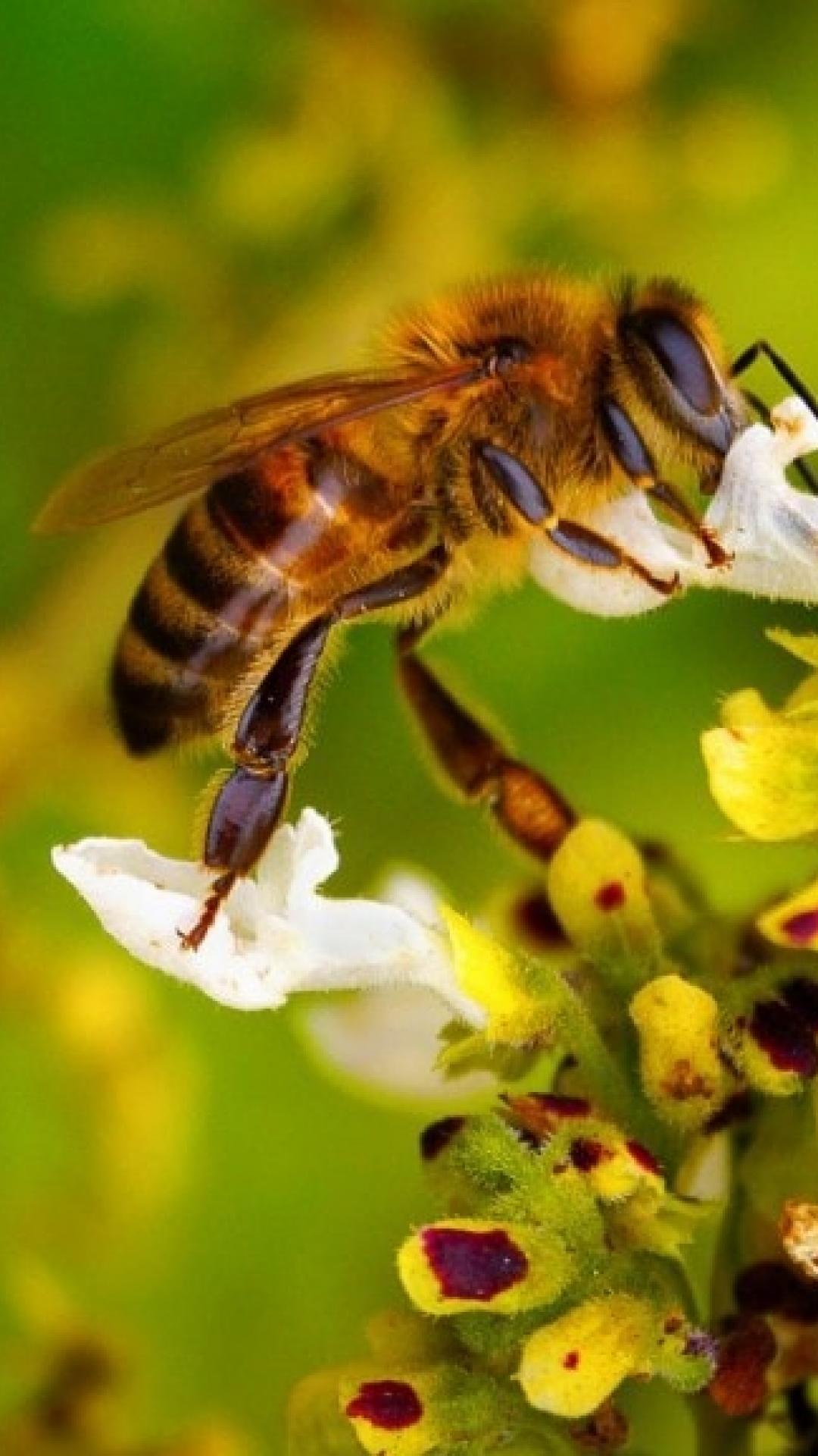 Bee Hd Wallpaper For Android Apk Download