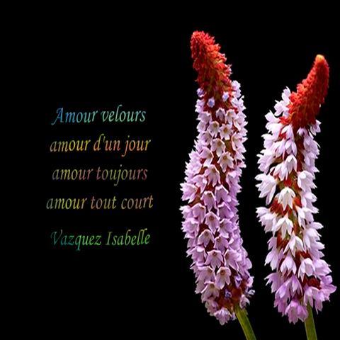 Proverbes Et Citations Mots Sur La Vie Et L Amour For
