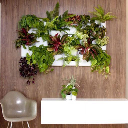 mejores plantas decorativas de interior Las Mejores Plantas De Interior Decorativas For Android