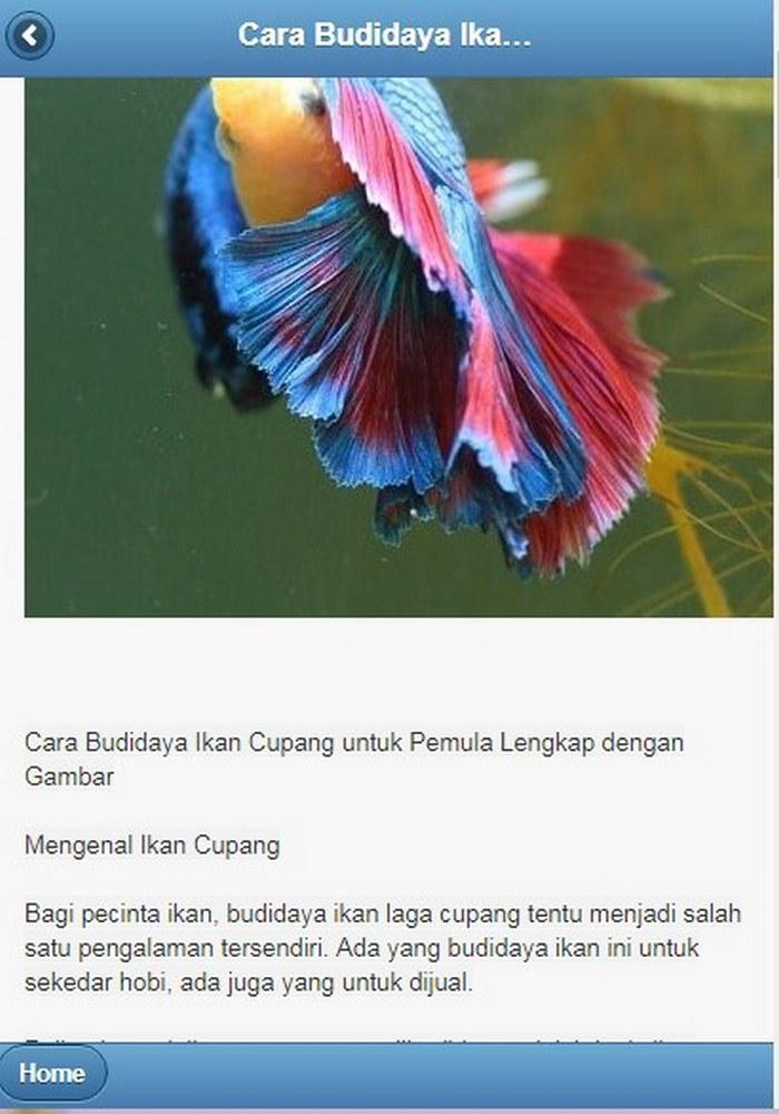 Unduh 830 Koleksi Gambar Ikan Laga Koi Terbaru