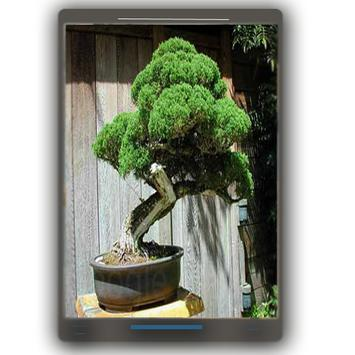 Bonsai Design Ideas screenshot 1