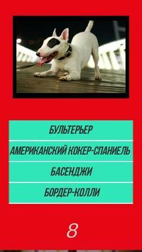 Викторина угадай породу dog собачки по картинке poster