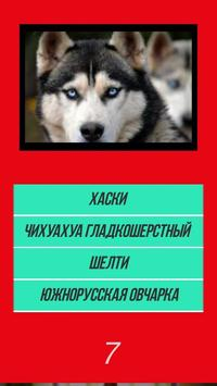 Викторина угадай породу dog собачки по картинке screenshot 2
