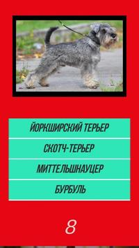 Викторина угадай породу dog собачки по картинке screenshot 4