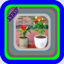 Cabe Rawit cultivation in polybag APK Android