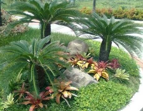 نباتات الزينة في الهواء الطلق تصوير الشاشة 2