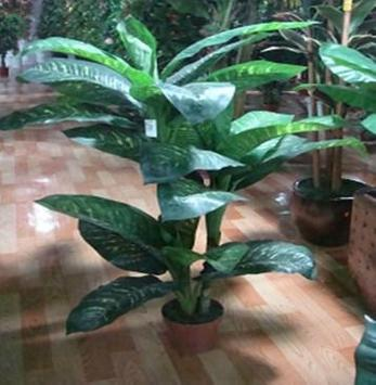 نباتات الزينة في الهواء الطلق تصوير الشاشة 3