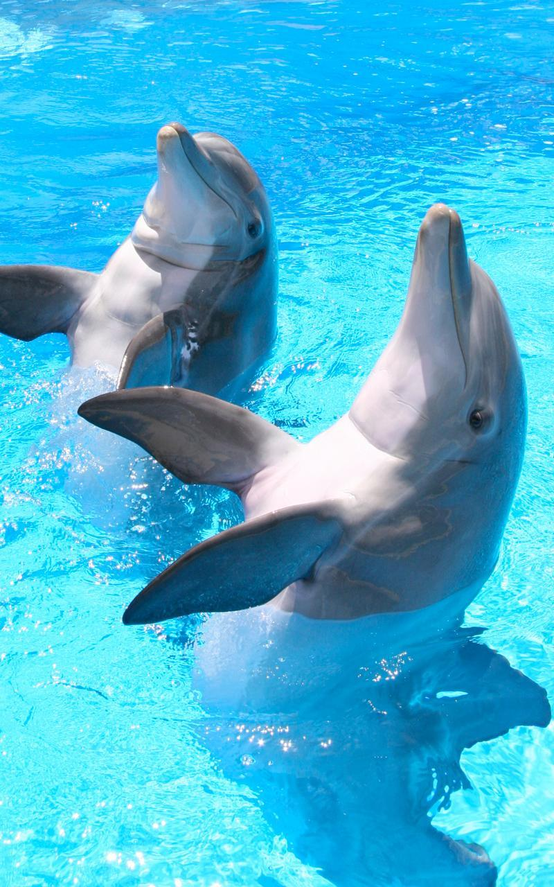 Dolphin Hd Live Wallpaper For Android Apk Download